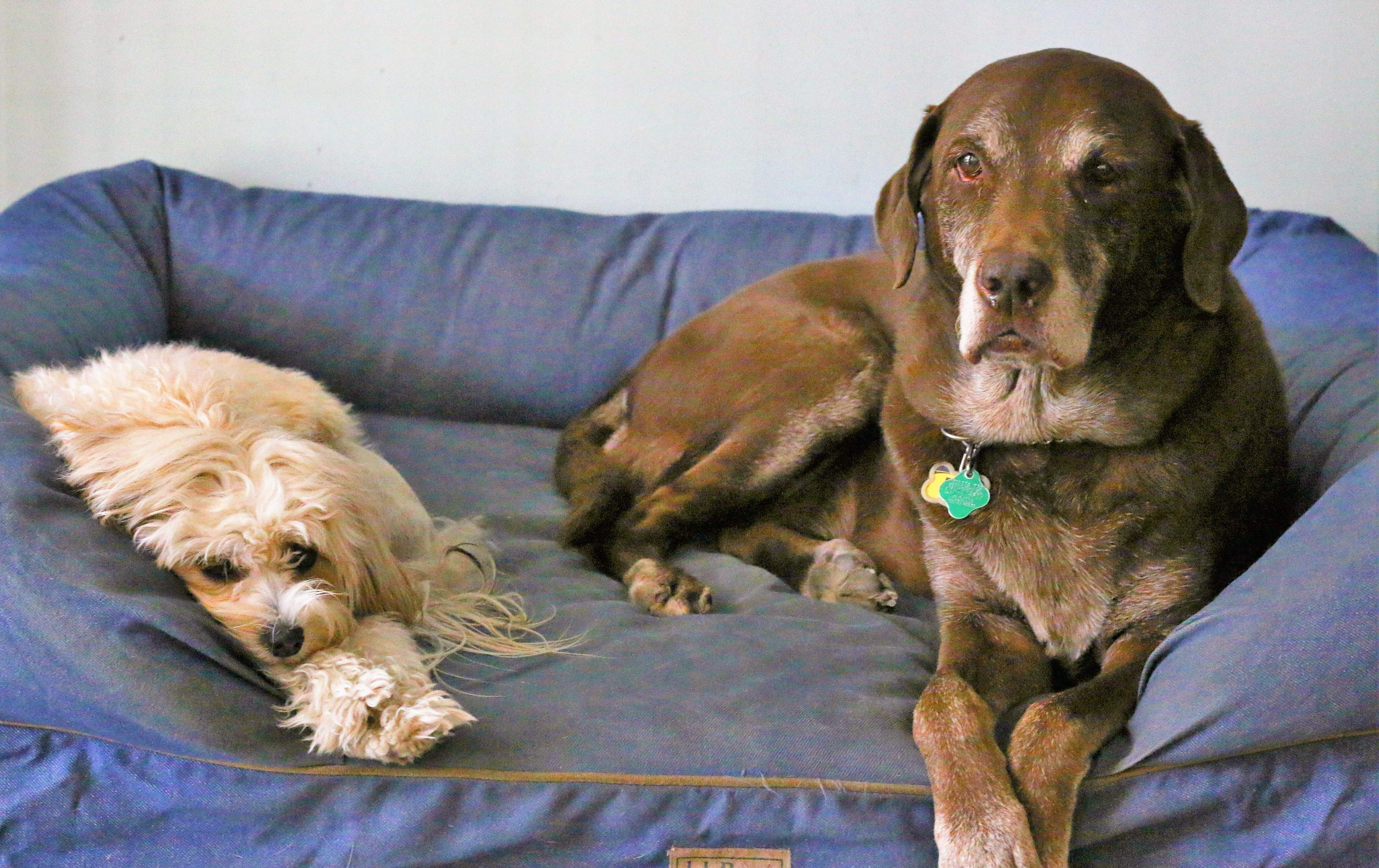 choosing to adopt a young or senior pet