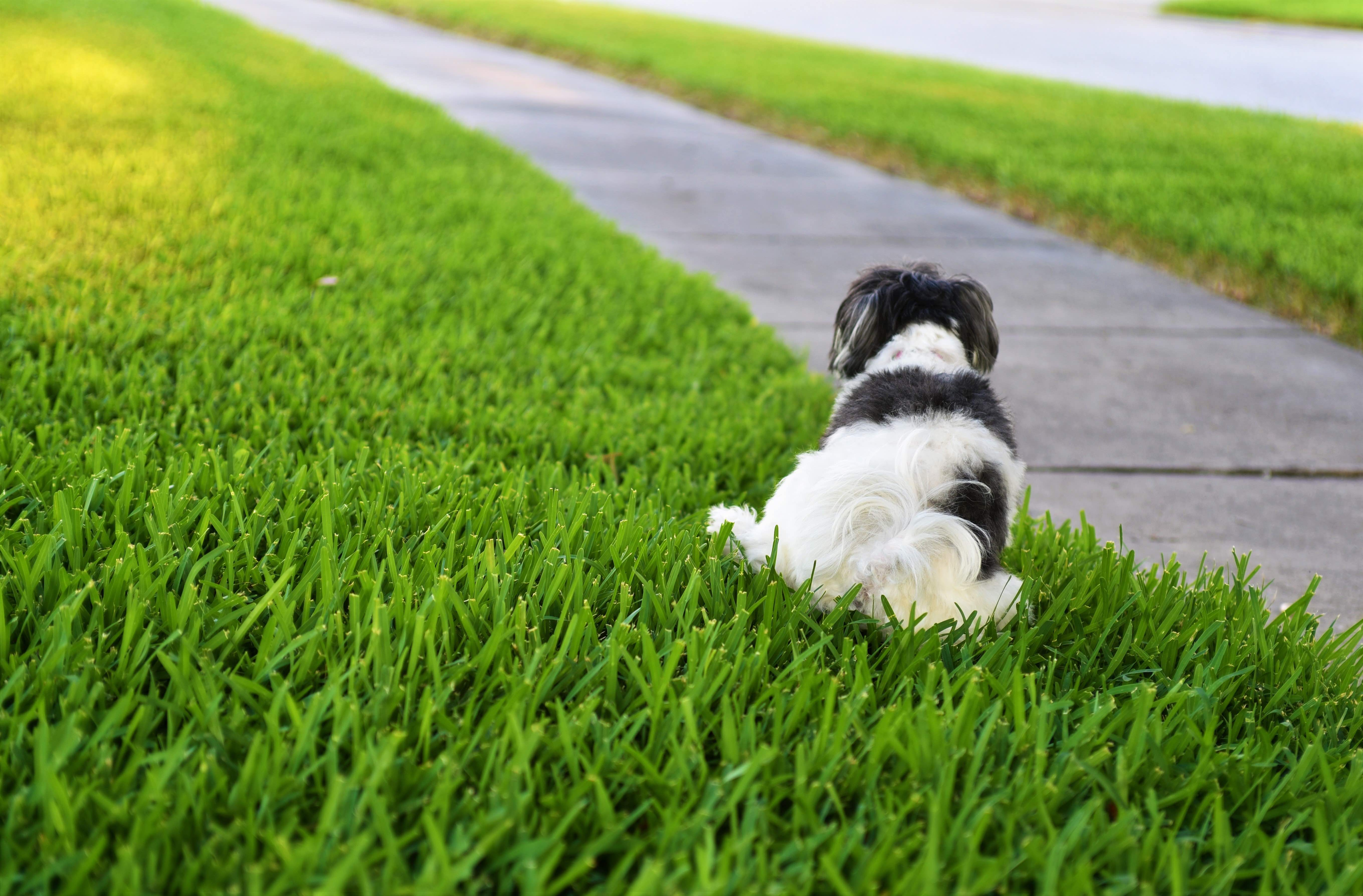 Adopting a housebroken dog