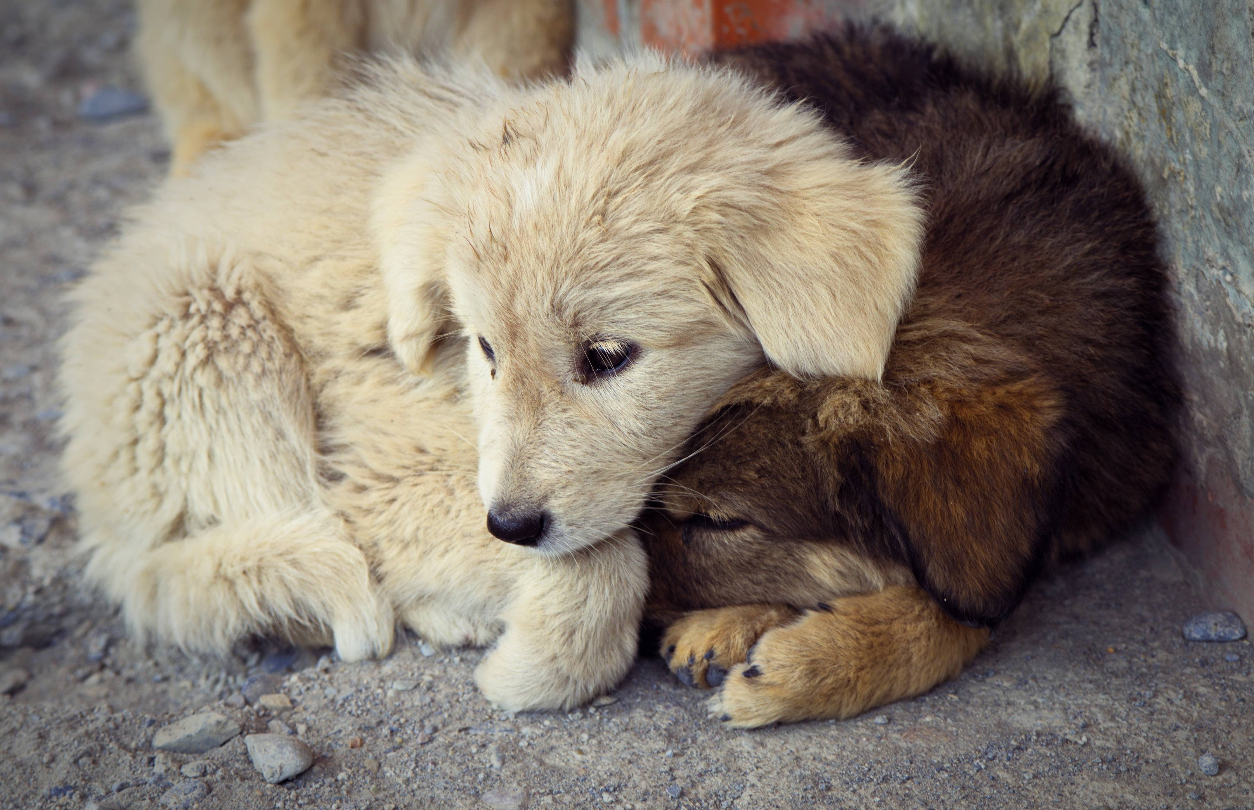 puppy mill puppies, adopt dont shop