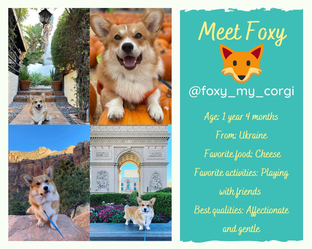 foxy the corgi